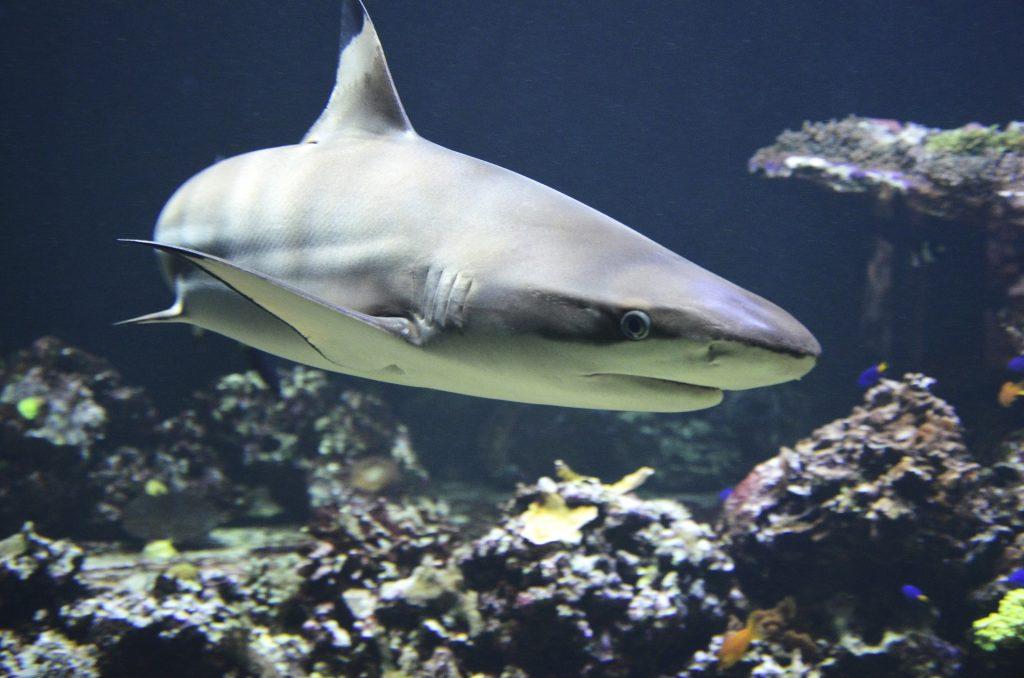 jumped the shark
